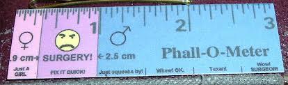 phallometer